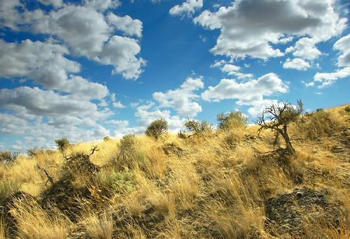 wood grass landscape ilovenature nikon rocks d70s hills nikkor sagebrush 18200mmf3556gvr