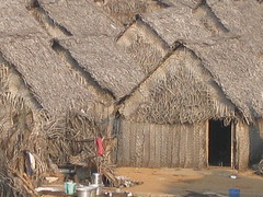 thatching, straw, hut,
