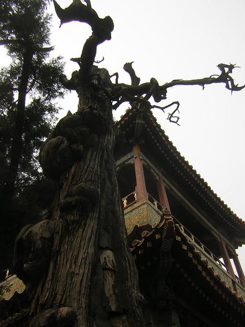 Casa en el rbol flickr photo sharing - Casas en el arbol ...