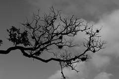 Branch in the Sky