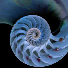 spiral, fractal art, macro photography,