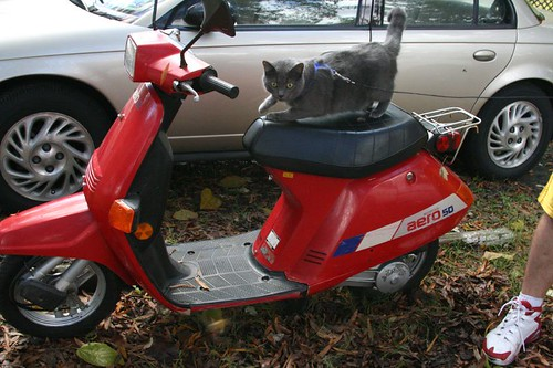 Albert, the scooter kitty