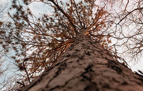 brainerd crowwingstatepark minnesota goldenhour sun sunset tree
