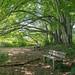 Blätterdach Ilkahöhe