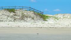 Praia Selvagem