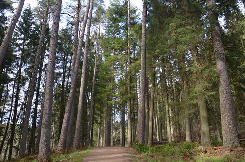 Kielder Forest May 18 (2)