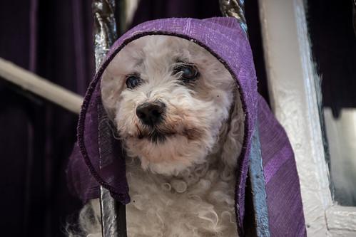 Religious dog