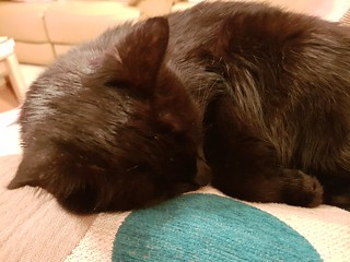 Sleepy Dim Sim