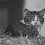 20180514-163326 - Cat Bokeh