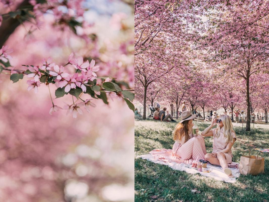 roihuvuori kirsikkapuisto annieveliina-1-side