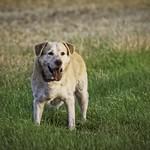 2016:07:26 20:42:22 Hund Pause Mäuse Buddeln