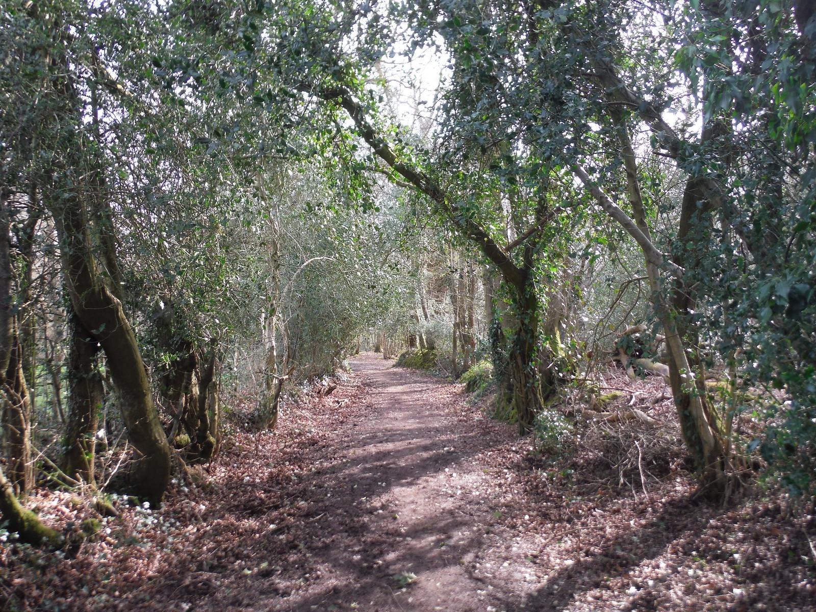 Sandpits Wood, Horsted Keynes SWC Walk 27 - East Grinstead to Wivelsfield or Sheffield Park