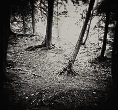 Enchantment-Black River, Gogebic County, MI