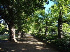 Albury. The Elm Avenue planted in  the Botanic Gardens in 1877.