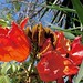 Flame Tree Flowers, Cenote Zaca, Valladolid, Yucatán, Mexico por dannymfoster