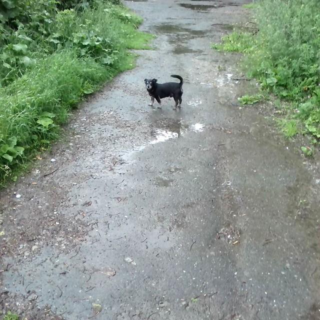 walk_with_dog