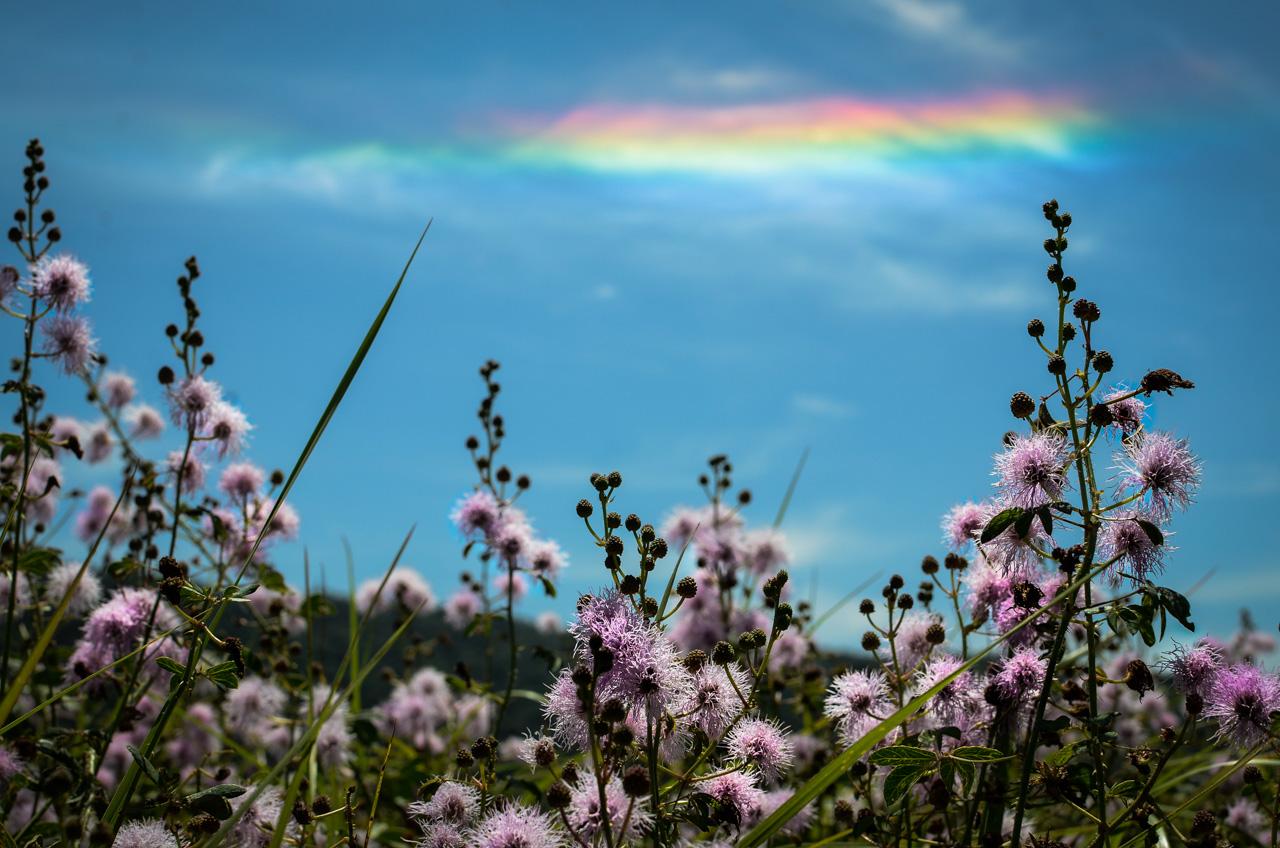 Flores silvestres pueden verse al costado de la ruta camino a la ciudad de Sapucai, en el departamento de Paraguarí. Se forman arcoiris con la luz del mediodía sobre el conocido Cerro Hú. (Elton Núñez).