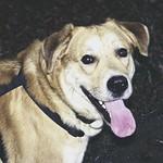 2007-11-04_16-45-12 - Hund auf Gassirunde