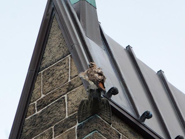 Cathedral Hawk - 8843