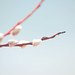 izzistudio posted a photo:	Minimalistic pussy willow and sky photography.If you like it you can buy a print in my ETSY shop - izzistudio.Free shipping worldwide.www.etsy.com/listing/595411186/minimalistic-nature-photog...