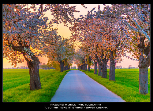 Country Road in Spring - Upper Lusatia