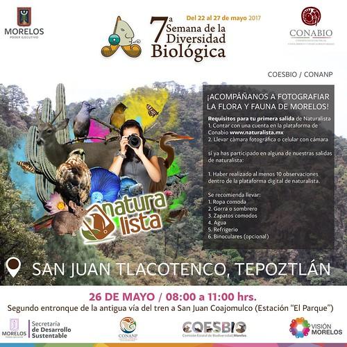 Naturalista. San Juan Tlacotenco