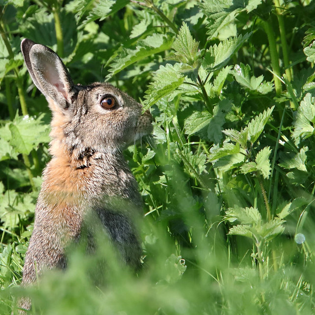 339 of Year 4 - Wild Watership Down resident