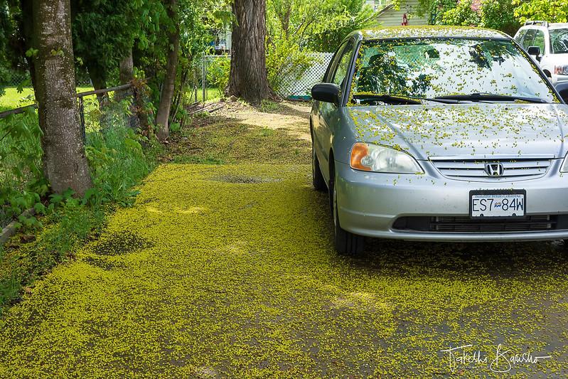 Maple flower carpet