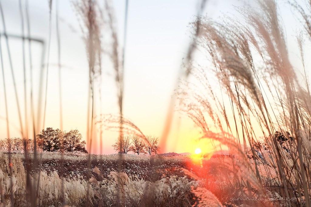 haneul_skypark_sunset