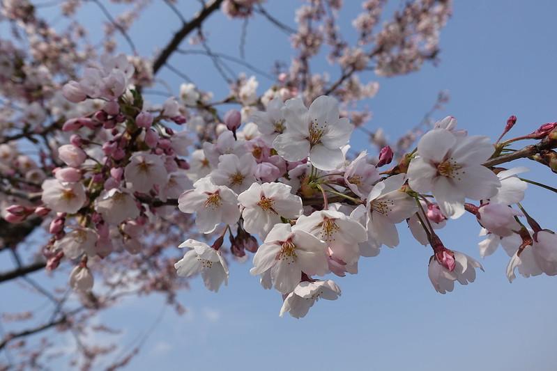 2018.4月桔梗奶茶色
