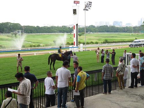ロイヤルターフクラブ競馬場の1レース勝ち馬