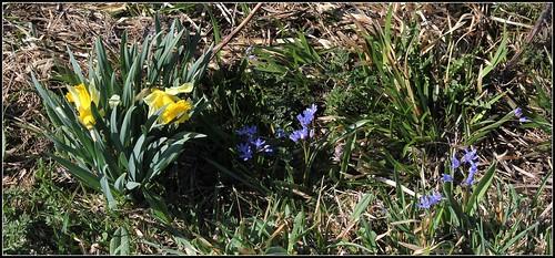 Autour du Mézenc en avril-mai - Page 2 40714461255_1f094747a0