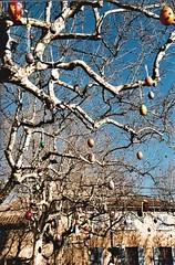 eggs tree