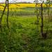 Cambridgeshire Fields