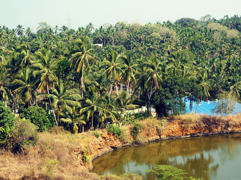 Palm trees trivandrum lake
