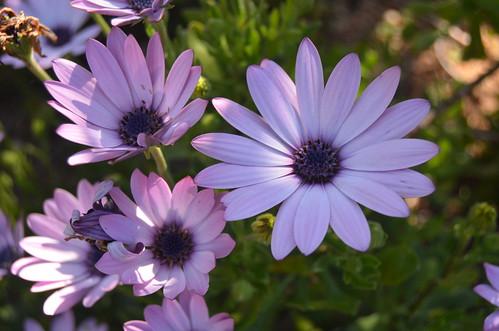 Flowers XXIII