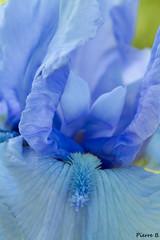 Bleu rêve...