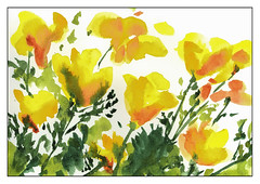 Poppies (1 of 1)
