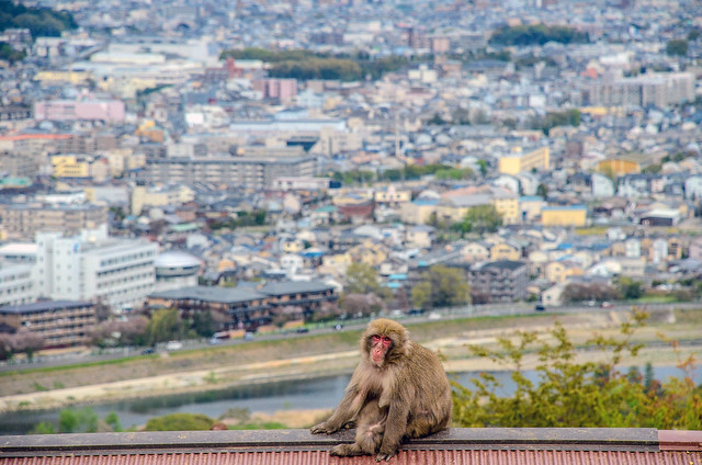 Monkey on roof city