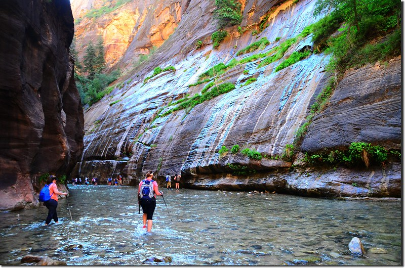 The Narrows, Zion National Park (8)