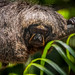 Female Saki Monkey-5797-2