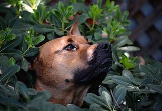 Dog in a Bush, 2