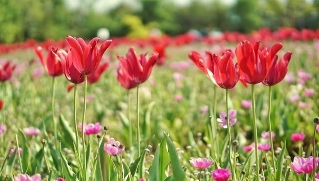 DSC08345-0花菜ガーデンH30041
