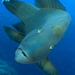 Palau 2018 - Nikon D850