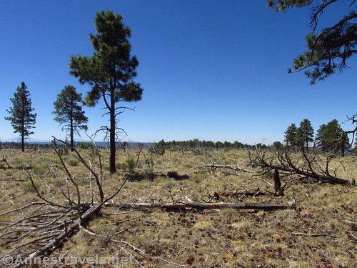 The meadow just before Honan Point in the North Rim of Grand Canyon National Park, Ariziona
