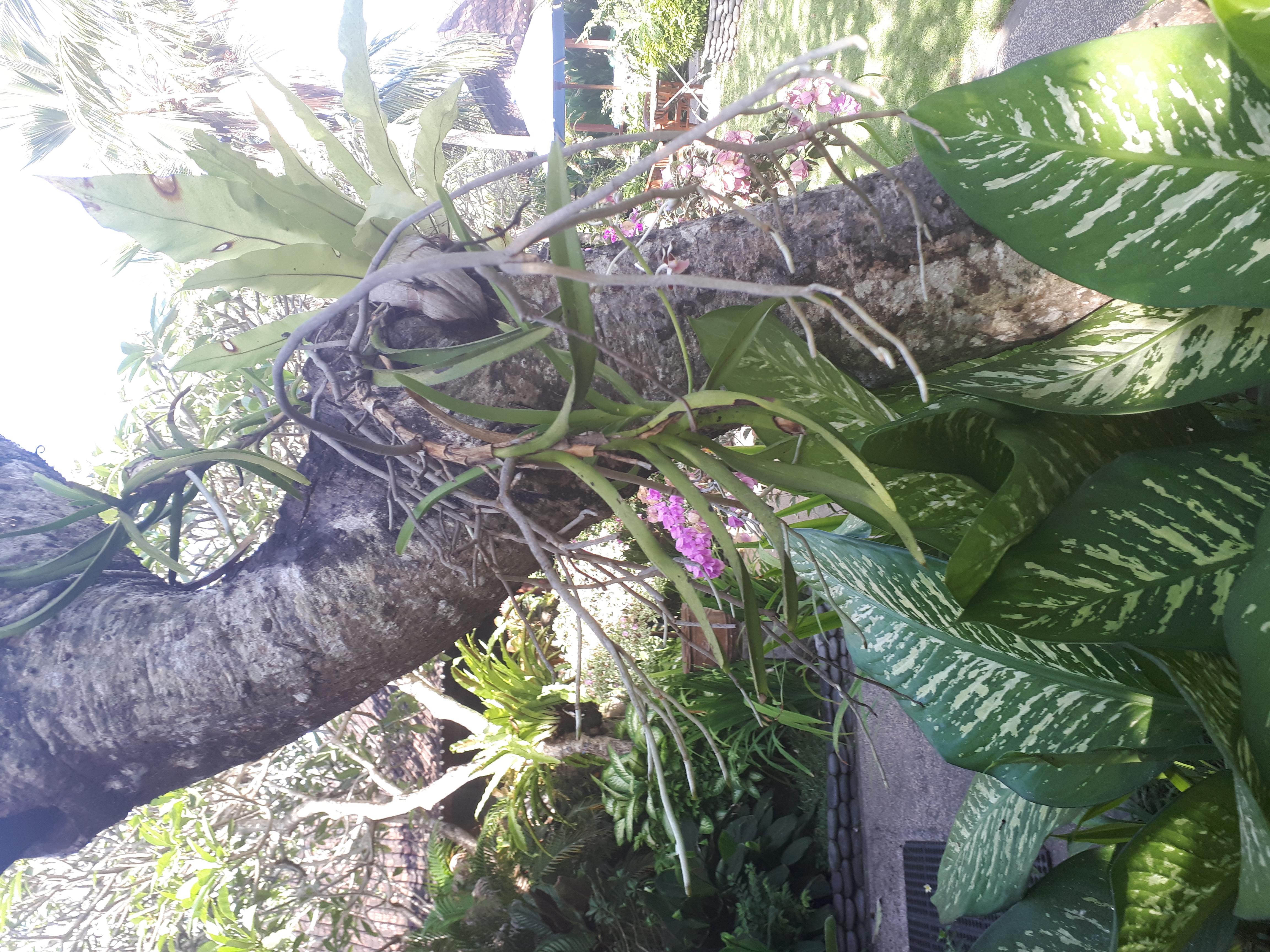 Orchidée 41506178120_38640d3c81_o