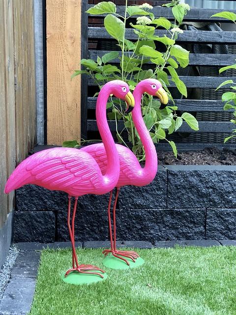 Roze flamingo's tuin