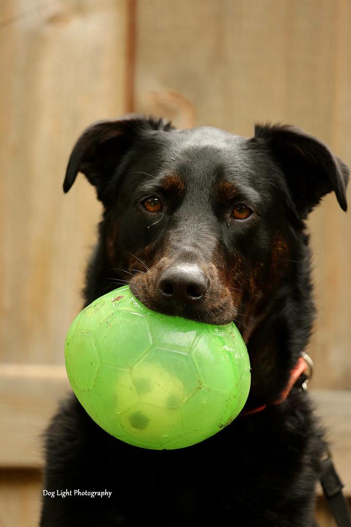 Rescue Dog Maddie