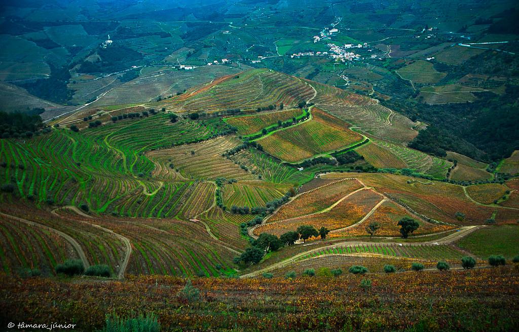 10.- 2015 - Outono no Douro Vinhateiro II (57)