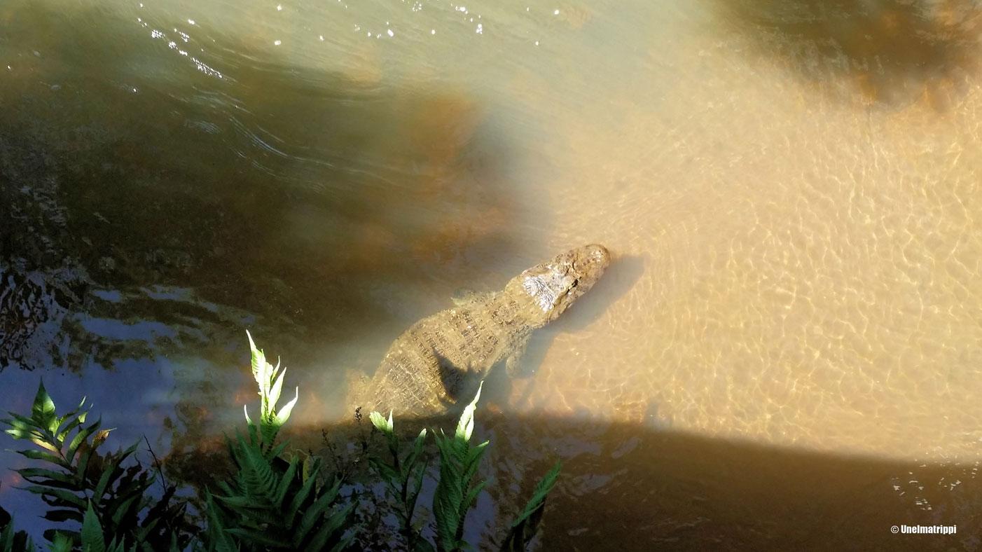 Vierailu Iguassun putouksilla on luontoretki parhaasta päästä - putousten lisäksi myös eläimissä riittää nähtävää.